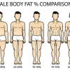 男性の体脂肪率ごとの体型の目安を図解|平均・理想は何%か?