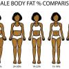 女性の体脂肪率ごとの体型の目安を図解|平均・理想は何%か?